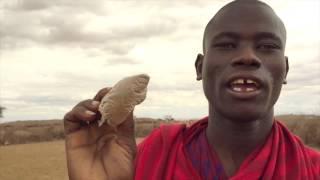 マサイバイアグラ Maasai Viagra
