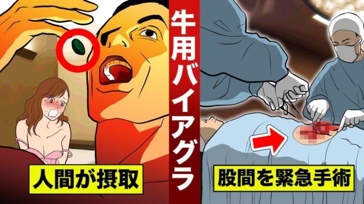 【実話】牛用バイアグラを飲んだ男。3日間勃◯し続け…緊急手術。
